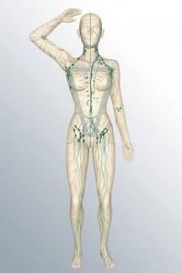limfni-sistem-200x300